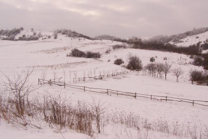 Вид на Лису гору. 18 січня 2010 р.
